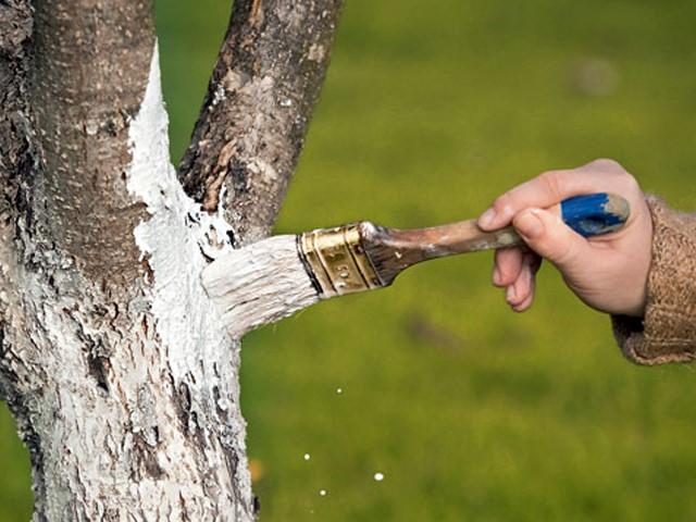 Защищаем плодовые деревья на дачных участках