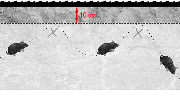 Обзор антикротовой сетки